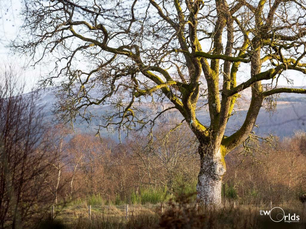 Winter Tree, 1/800s @ 150mm, f2.8